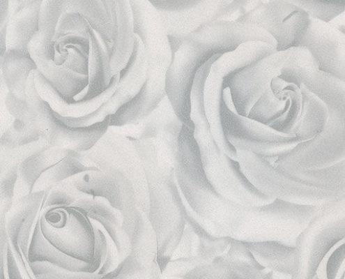 433 Роза белая