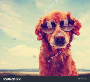 Фотообои с собакой в очках
