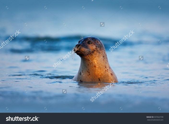 Фотообои с тюленем