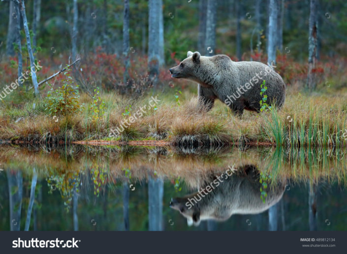 Фотообои медведь на рыбалке