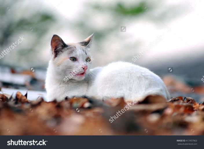 Фотообои с кошкой