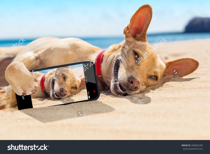 Фотообои собака на пляже