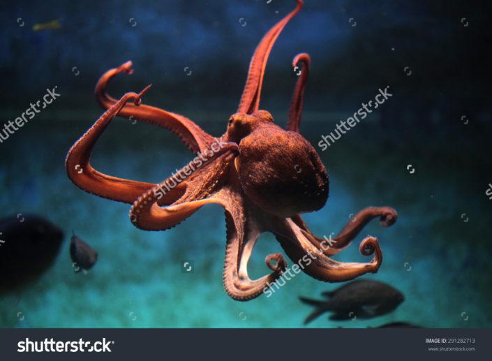 Фотообои с осьминогом