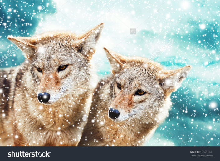 Фотообои с волками