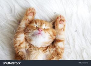 Фотообои рыжий кот