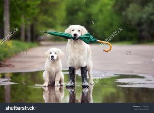 Фотообои с собаками