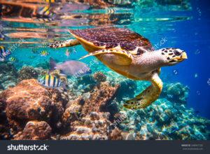 Фотообои черепаха на рифах