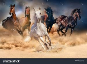 Фотообои с лошадьми
