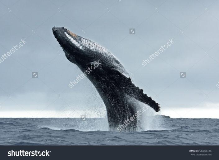 Фотообои с китом