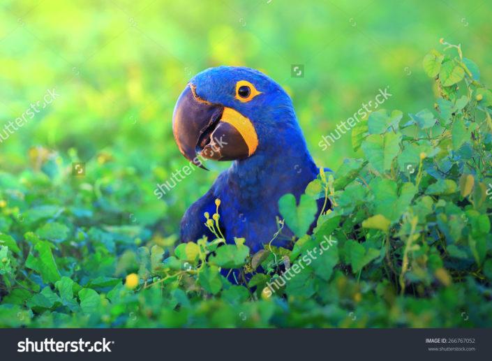 Фотообои попугай
