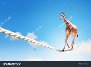 Фотообои с жирафом