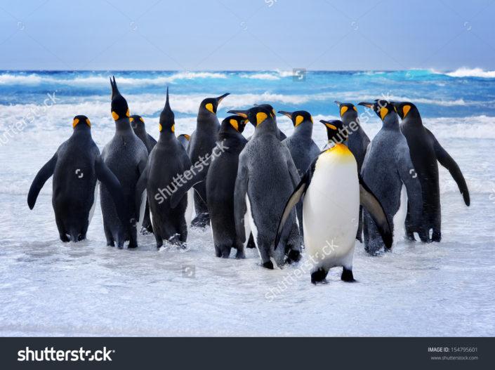 Фотообои с пингвинами