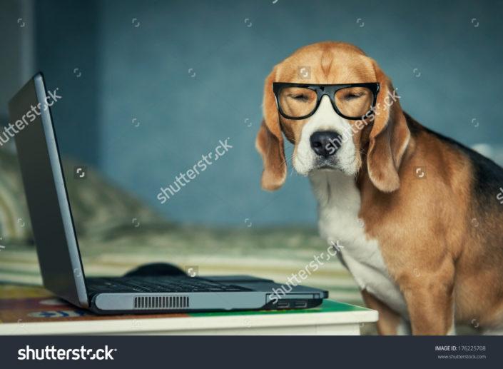 Фотообои с собакой