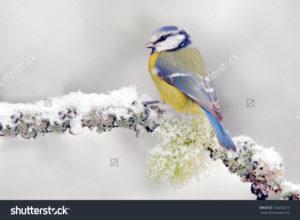 Фотообои снегирь