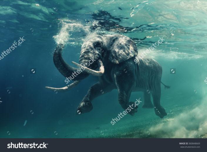Фотообои слон под водой