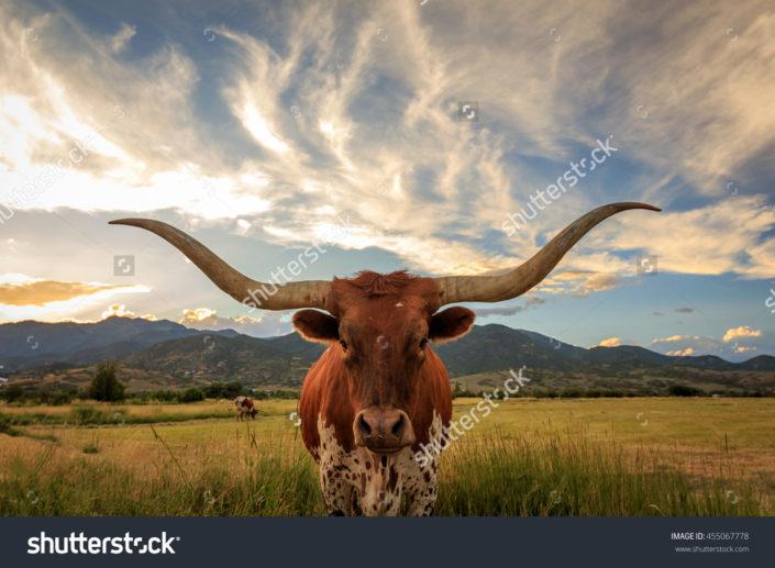Фотообои с быком