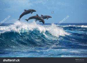 Фотообои дельфины на воде
