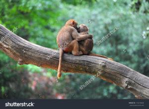 Фотообои с обезьянами
