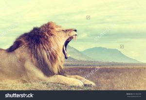 Фотообои со львом
